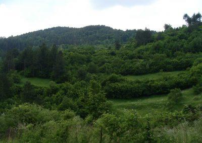 landscape_53