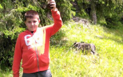 За гъби в гората